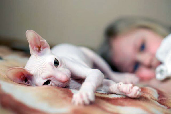 how to groom a hairless cat