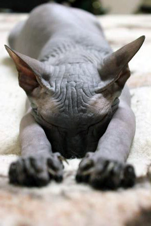 beautiful sphynx names