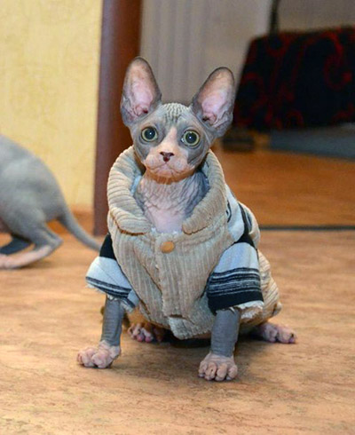 how to care for a hairless cat
