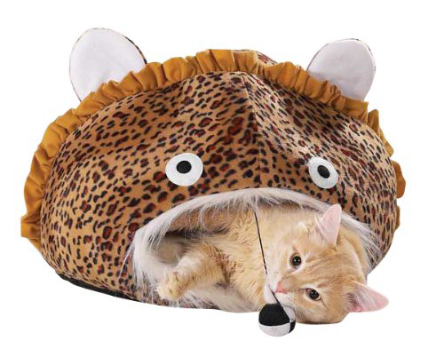 Arrange For Special Soft Bed For Cats To Ensure Best Care